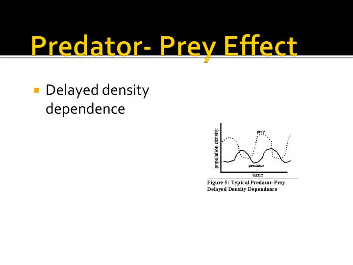 Predator- Prey Effect