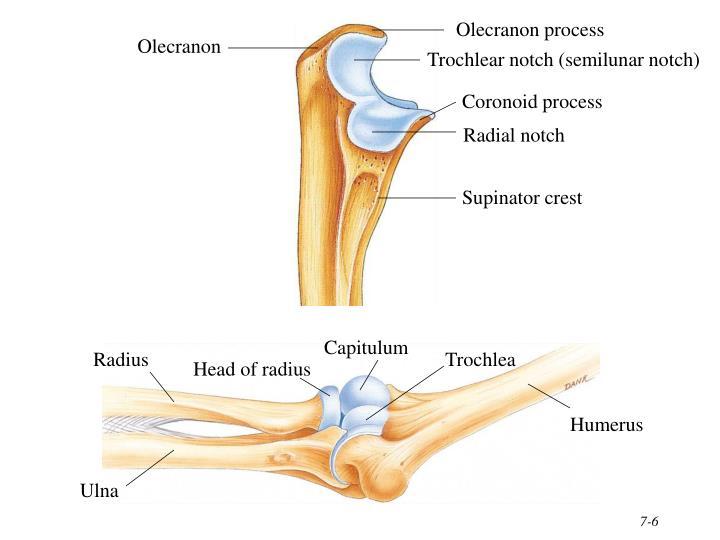 Olecranon process