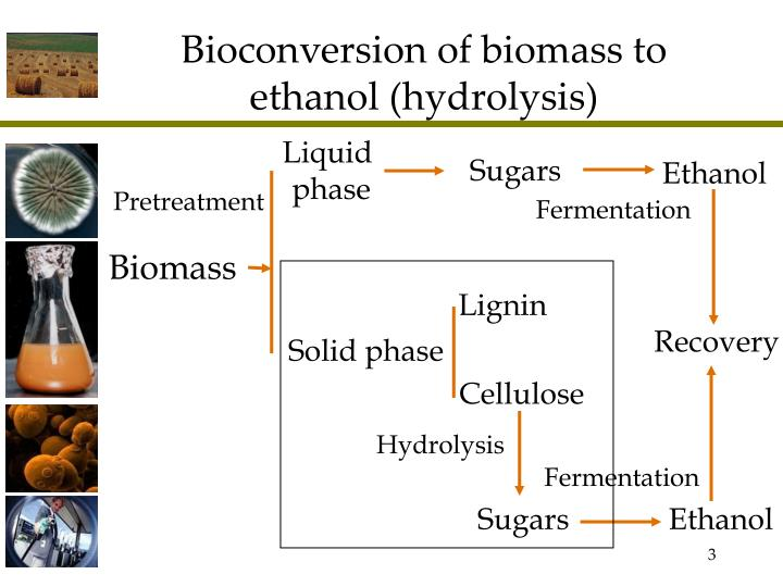 biosynthesis of ethanol from sucrose fermentation Sucrose or 'table sugar' as it commonly known is a disaccharide consisting of both alpha-glucose and fructose monomers in eqimolar quantities since it's hydrolysis therefore produces 2 sugars, the quantity of ethanol formed in the fermentation re.