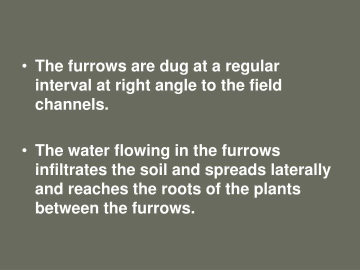 The furrows are dug at a regular interval at right angle to the field channels.