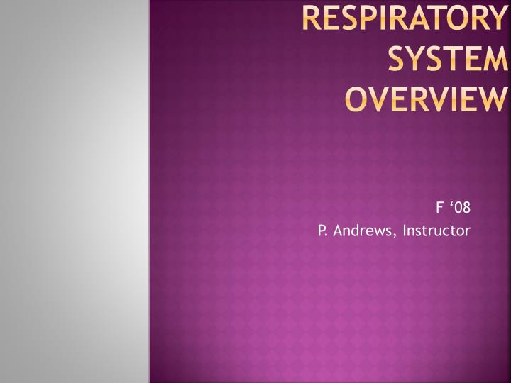 respiratory system overview n.