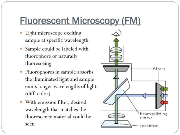 Fluorescent Microscopy (FM)