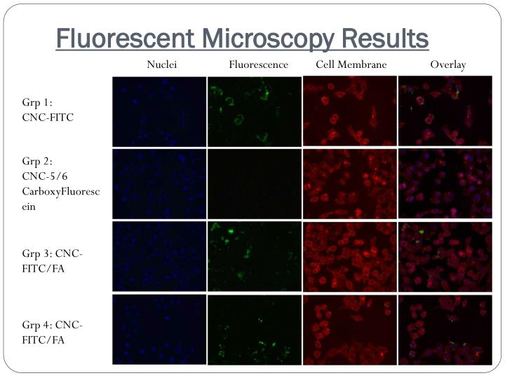 Fluorescent Microscopy Results