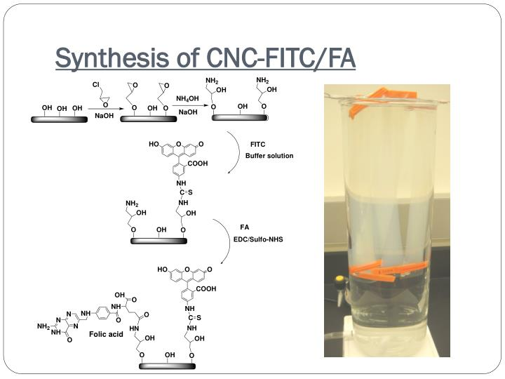 Synthesis of CNC-FITC/FA