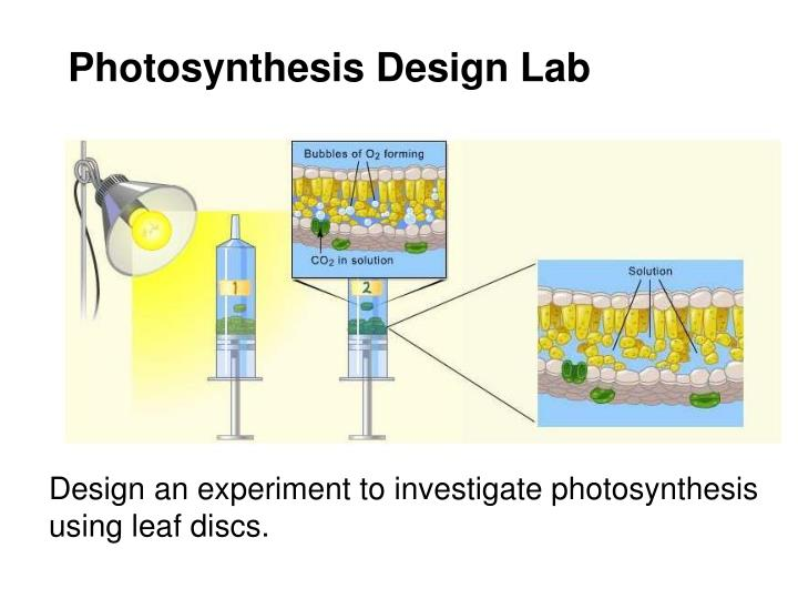 Photosynthesis Design Lab