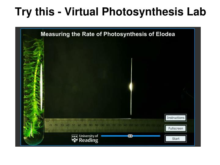 Try this - Virtual Photosynthesis Lab