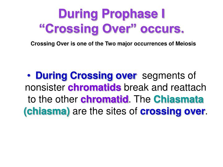 during crossing over