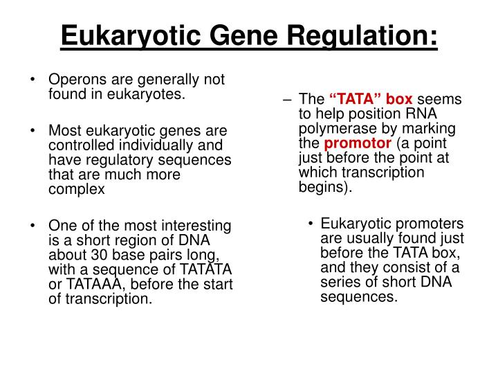 Operons are generally not found in eukaryotes.