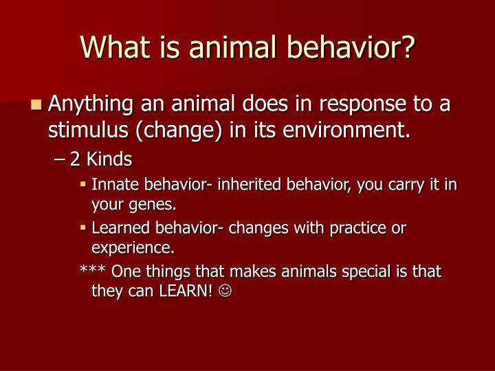 What is animal behavior