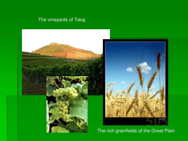 The vineyards of Tokaj