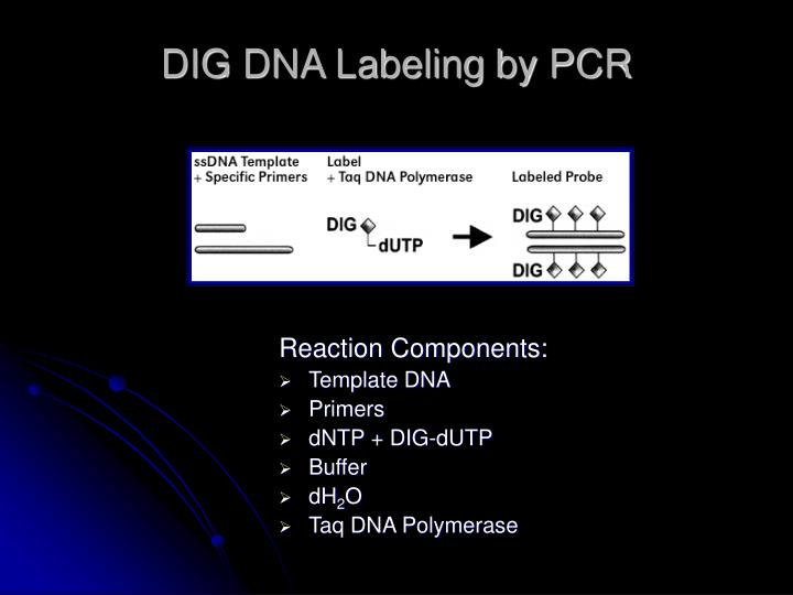 DIG DNA Labeling by PCR