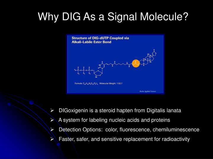 Why DIG As a Signal Molecule?