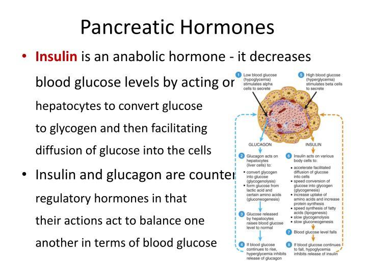 Pancreatic Hormones