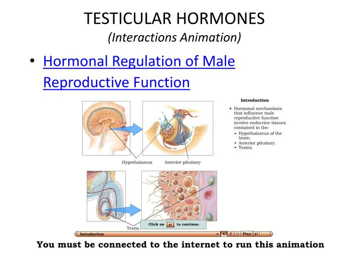 TESTICULAR HORMONES