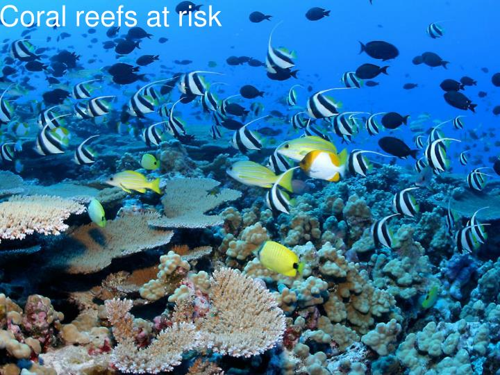 Coral reefs at risk