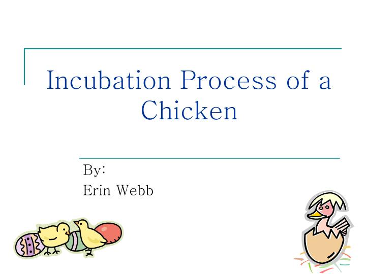 incubation process of a chicken n.