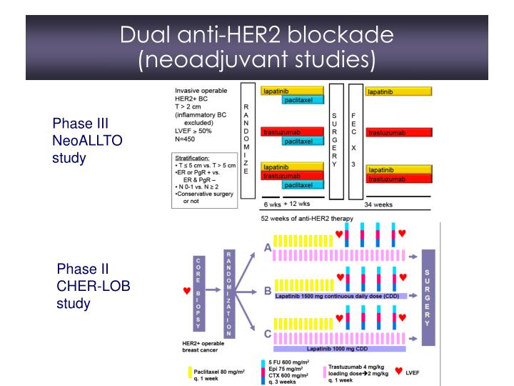 Dual anti-HER2 blockade