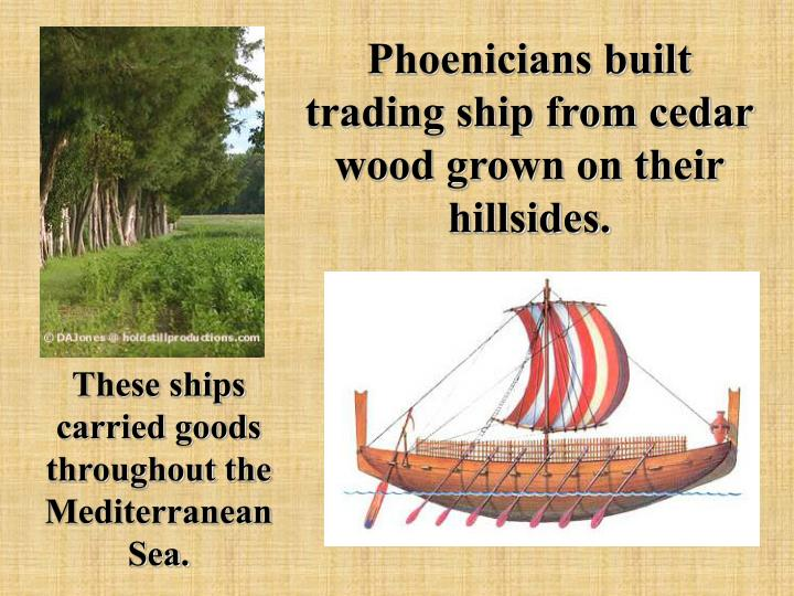 Phoenicians built trading ship from cedar wood grown on their hillsides.