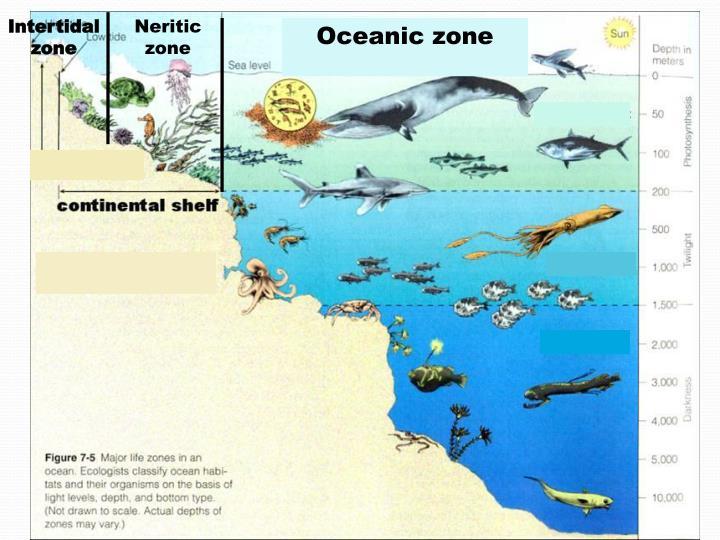 PPT - Marine Ecosystems PowerPoint Presentation