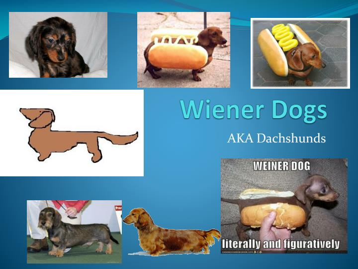 PPT - Wiener Dogs PowerPoint Presentation - ID:2417651