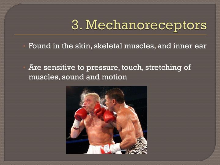3. Mechanoreceptors