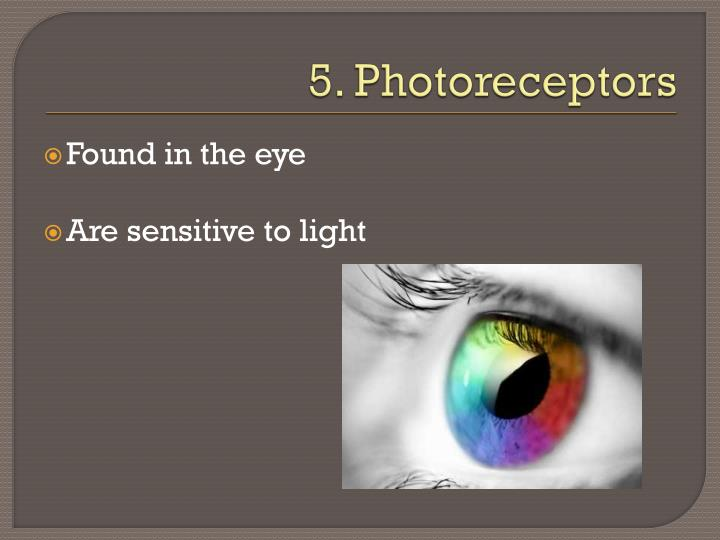 5. Photoreceptors