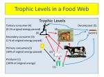 trophic levels in a food web