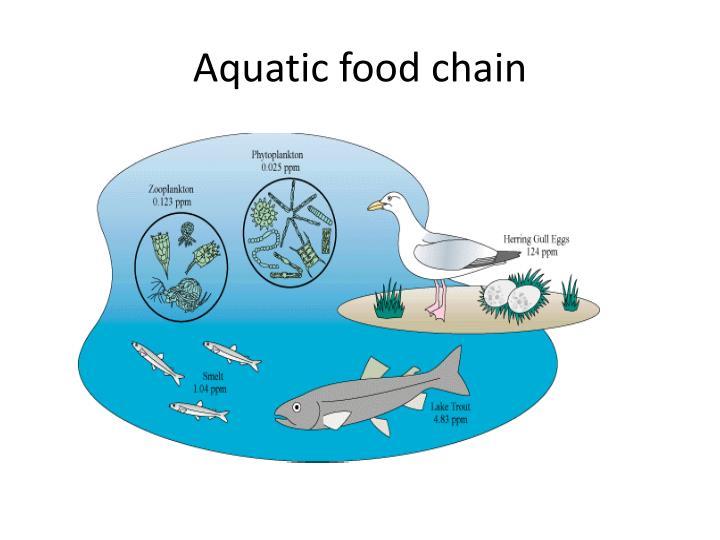 Aquatic food chain