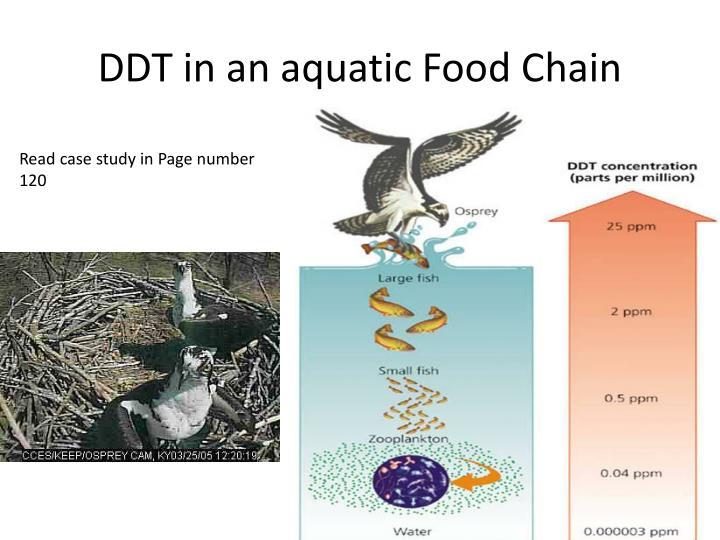 DDT in an aquatic Food Chain