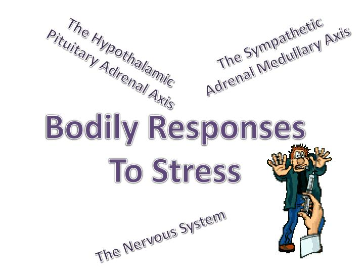 bodily responses to stress n.