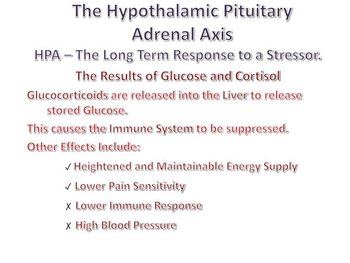 The Hypothalamic Pituitary Adrenal Axis