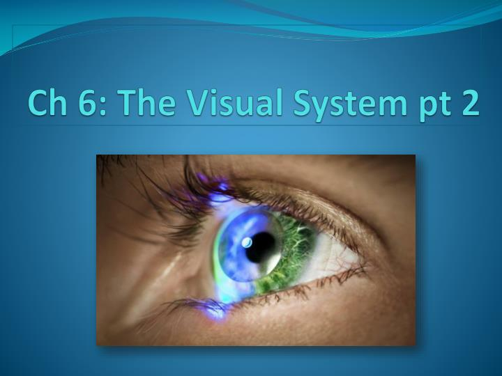 Ch 6 the visual system pt 2