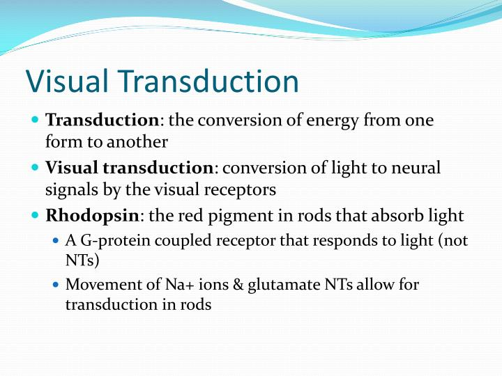 Visual Transduction