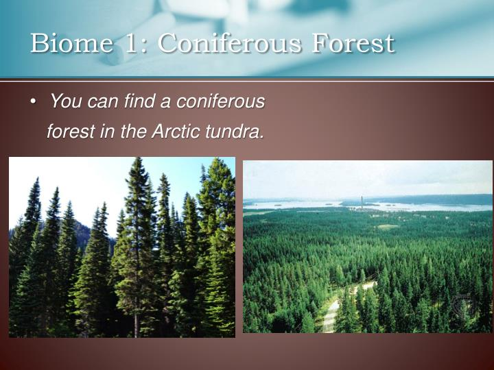 Biome 1: Coniferous Forest