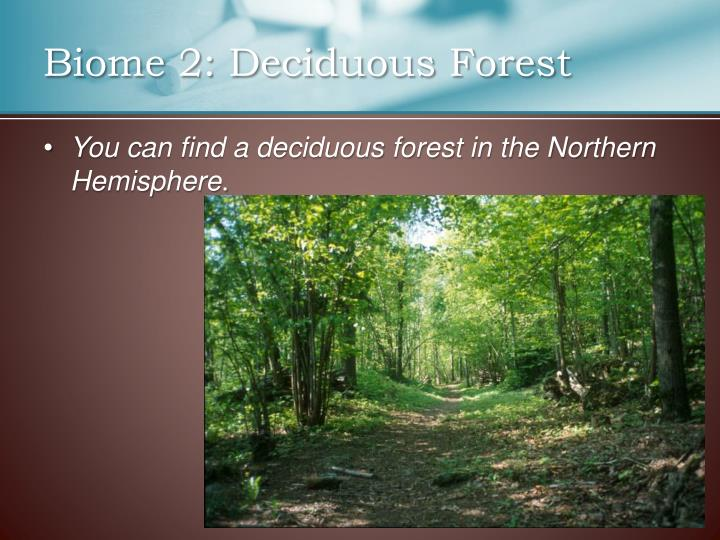 Biome 2: Deciduous Forest