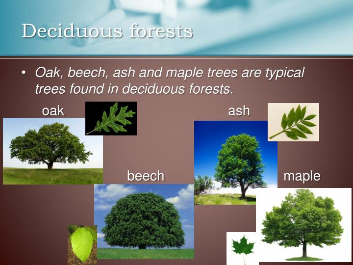 Deciduous forests