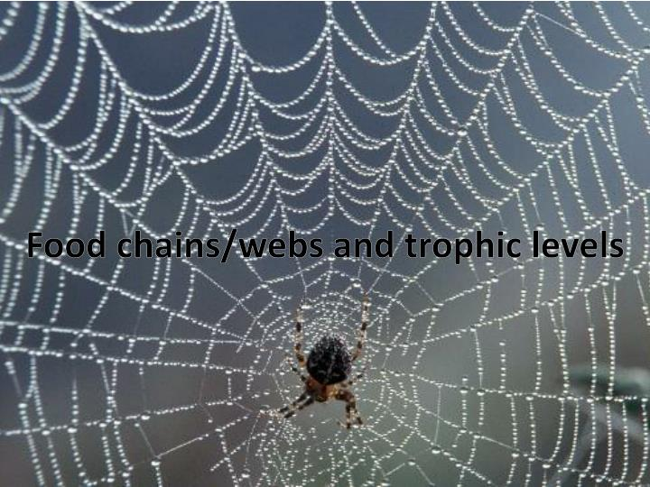 Food chains webs and trophic levels