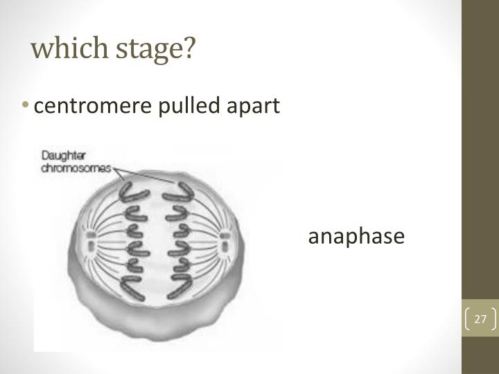 which stage?