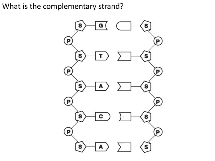 What is the complementary strand?