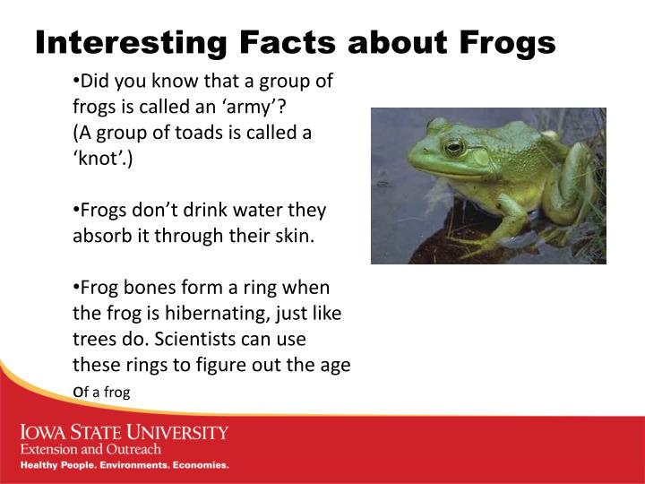 Interesting Facts about Frogs