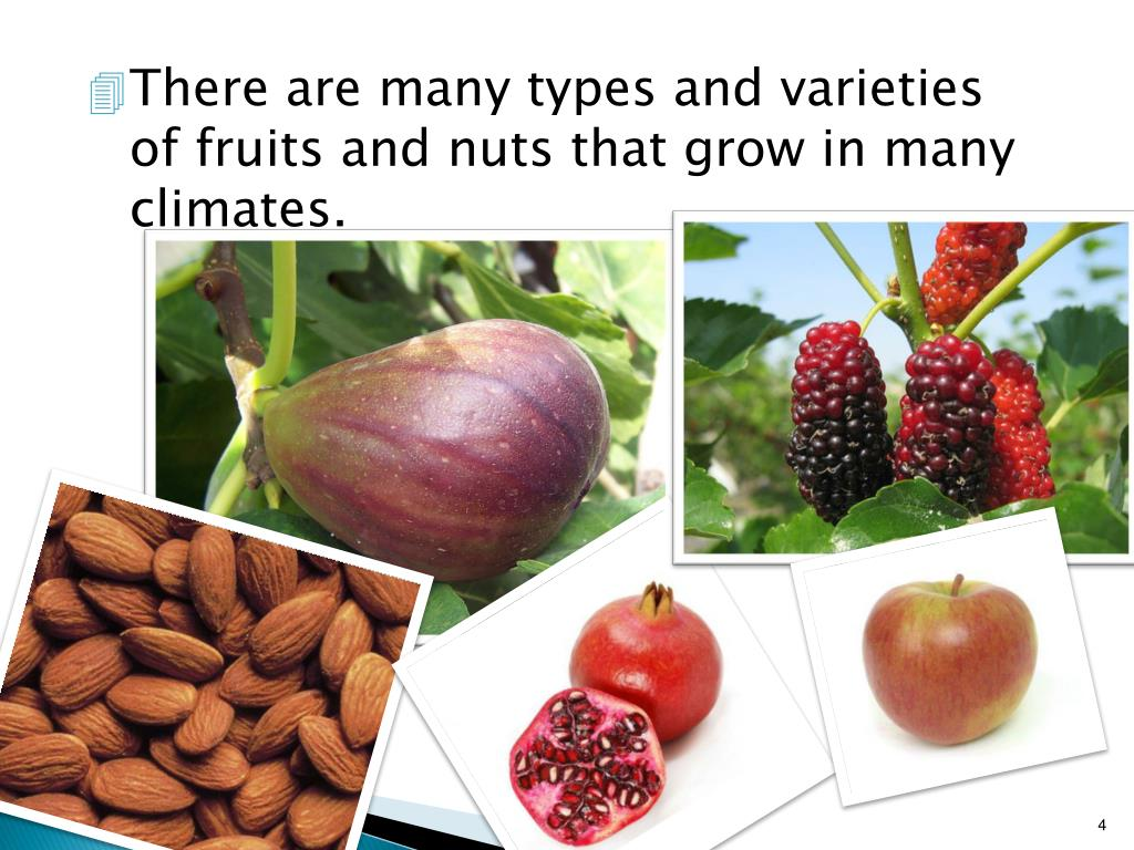 PPT - Unit A: Introduction to Fruit and Nut Production