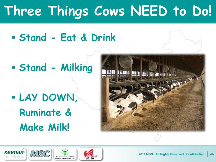 Three Things Cows NEED to Do!
