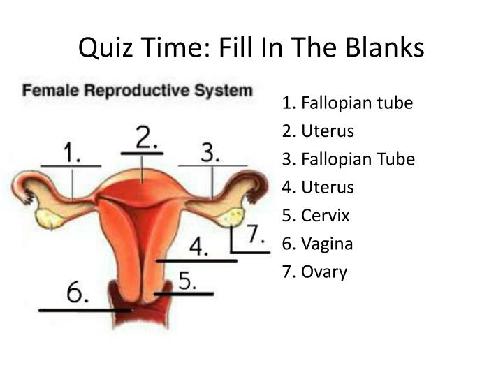 Quiz Time: