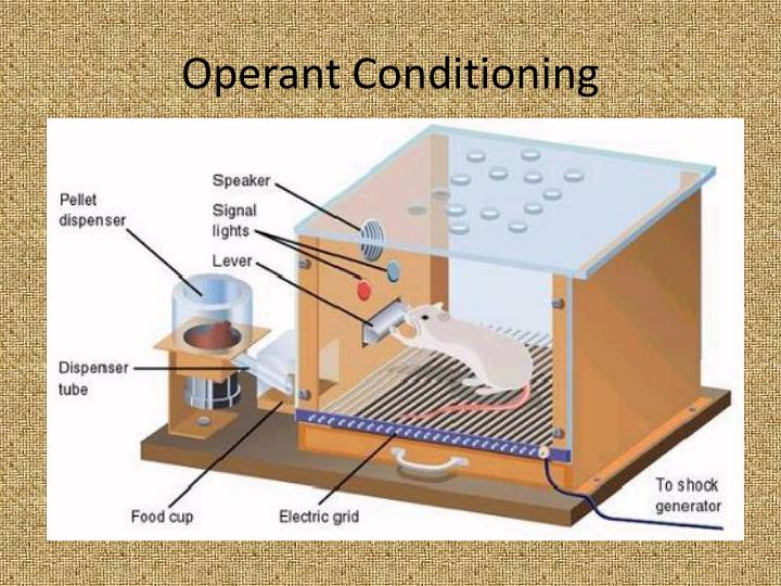 Operant conditioning1