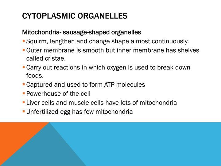 Cytoplasmic Organelles