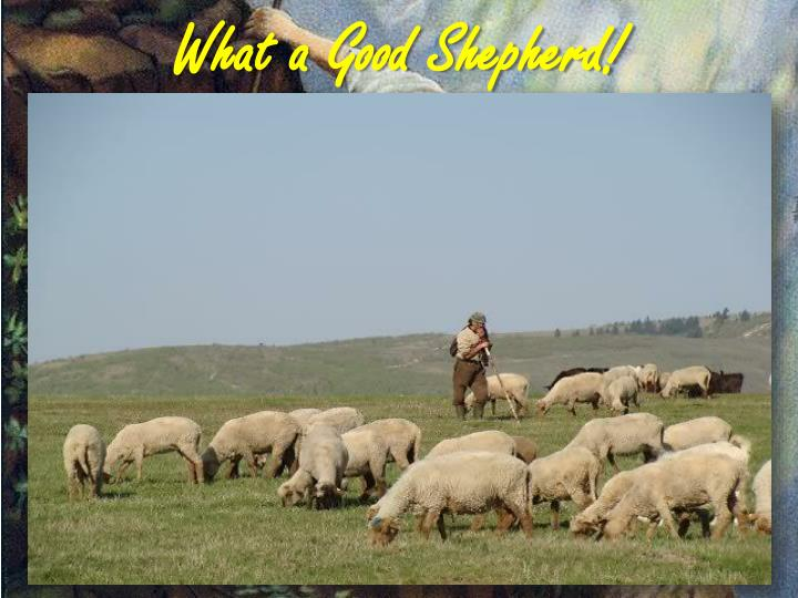 What a Good Shepherd!