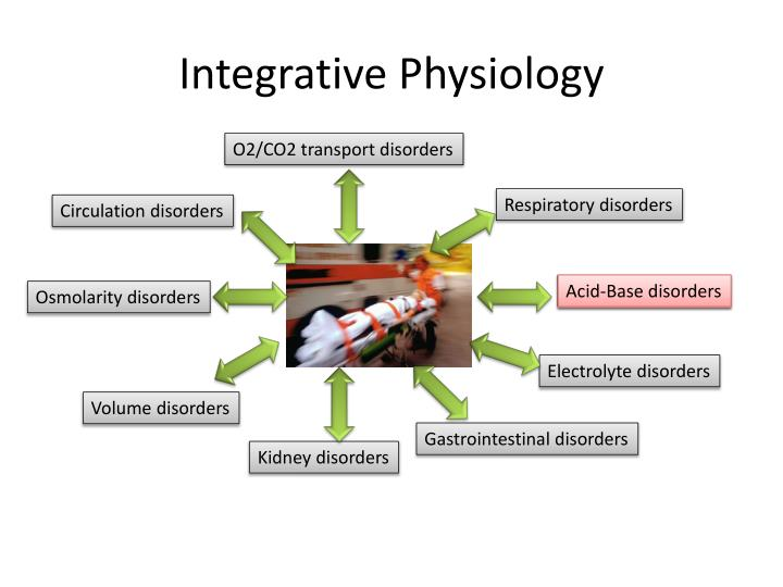 integrative physiology n.
