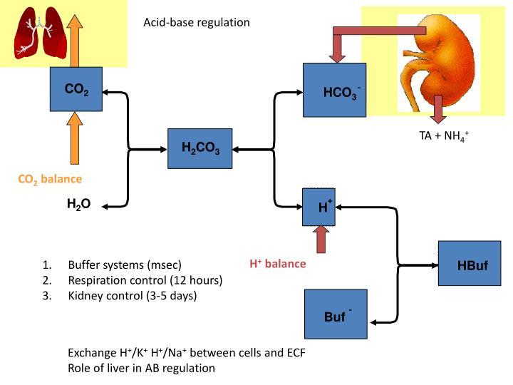 Acid-base regulation