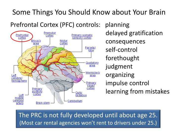 Some Things You Should Know about Your Brain