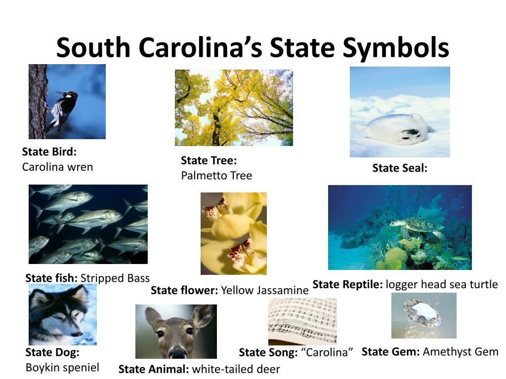 Ppt South Carolinas State Symbols Powerpoint Presentation Id